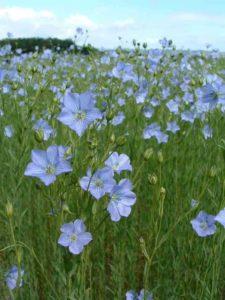 lin-fleur